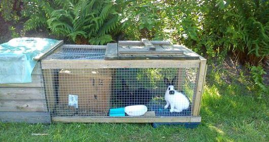 Kaniner i trädgården